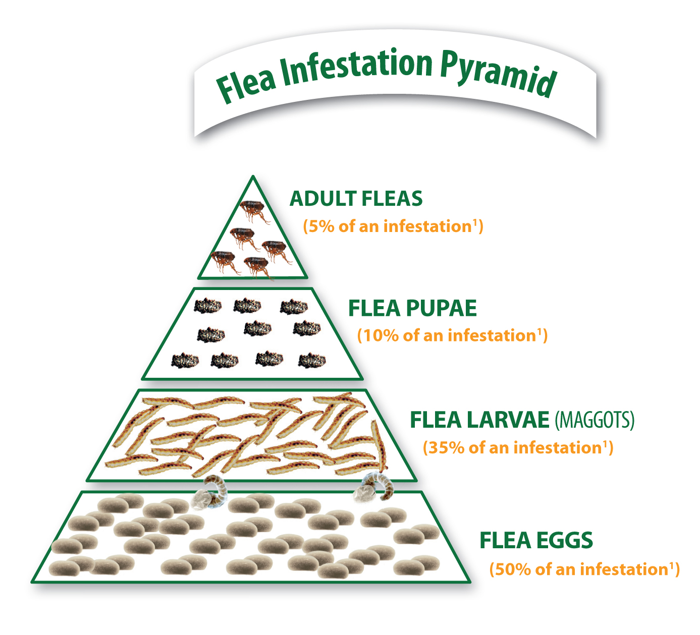 Flea%20pyramid%20adult%20fleas%205%25%20infestation