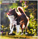 16 Month Traditional Style Dog Breeds Wall Calendar