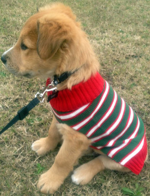"28"" Striped Dog Sweater"