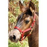 "3/4"" Adjustable Nylon Miniature Halter"