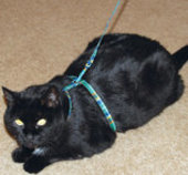 "Jeffers Nylon Cat Harness, 9""-11"""