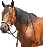 Breaking Hackamore Bridle for Horse