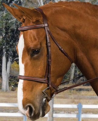 Collegiate Plain Raised Bridle With Reins, brown