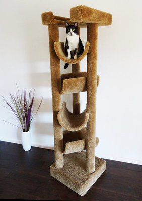 Cat Skyscraper