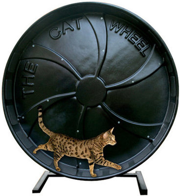Pet Exercise Wheel