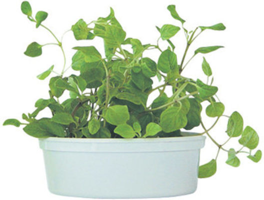 Catnip Plus Easy Grow Kit