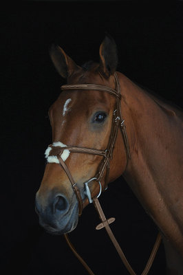 Collegiate Mono Crown Figure 8 Bridle