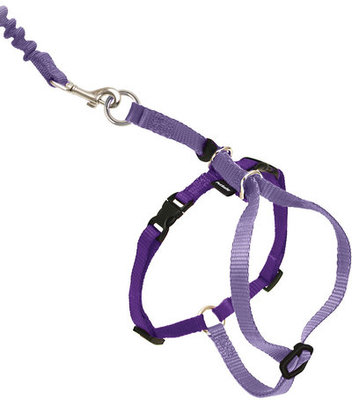 Come with Me Kitty Harness & Bungee Leash