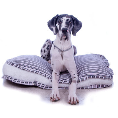 "Deluxe Gusseted Comfy Pet Bed!  37"" x 25"" x 4"""