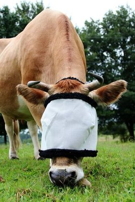 Cow Fly Mask (White w/ Black), each