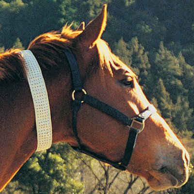 Defy the Fly Collar, Horse