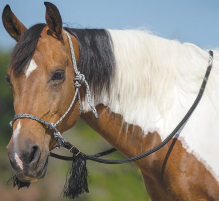 Deluxe Nylon Bitless Bridle