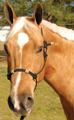 Elite Training Halter, Horse