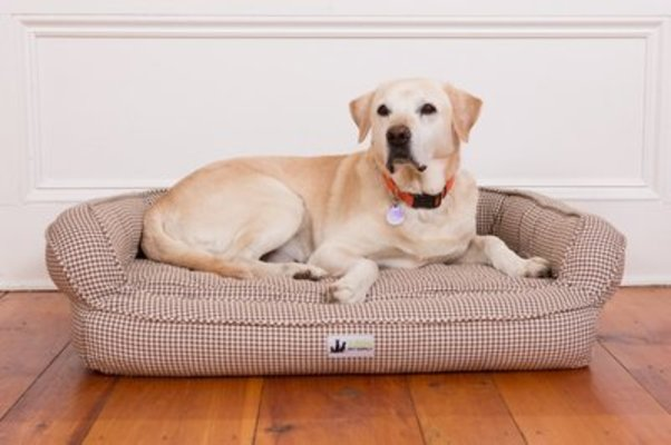 EZ-Wash Premium Headrest Memory Foam Dog Bed, Medium