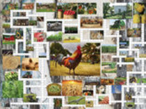 Farm & Country Puzzle Combo, 1000 Pieces
