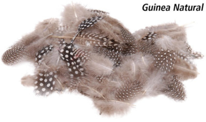 Guinea Feathers in Fashion, Natural