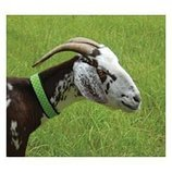 Fly Free Zone Collar for Goats