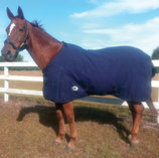 Jeffers Canvas Horse Blanket, Navy & White Check