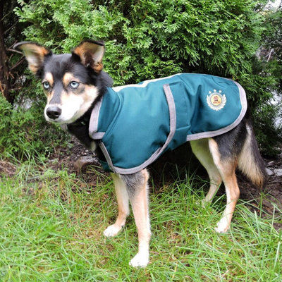 Halo Major Dog Coat with Collar