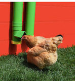 High End Hen Chicken Feeder & Waterer