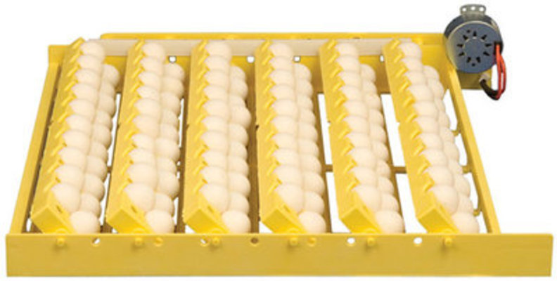 Automatic Quail/Chicken Egg Turner, each