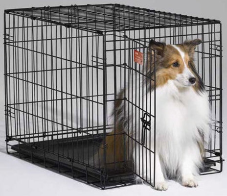 Midwest iCrate - Single Door Fold & Carry Dog Crate