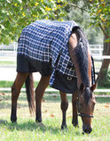 Jeffers 600D Economy Horse Blanket, 240g