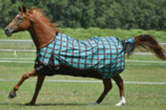Jeffers 600D Economy Medium Weight Turnout Horse Blanket, 240g