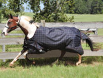 Jeffers 1200D Economy Plus Horse Blanket, 240g