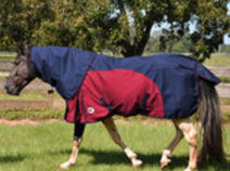 Jeffers Economy Turnout Blanket w/ Detachable Neck Rug, Navy/Maroon