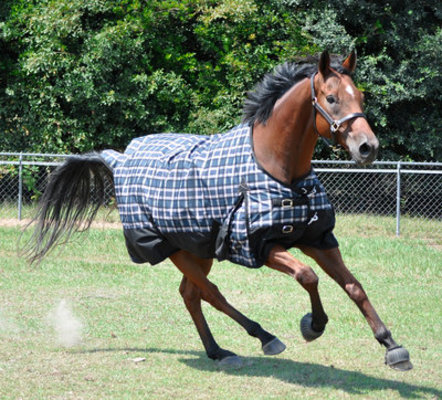 Jeffers 600D Economy Horse Turnout Sheet