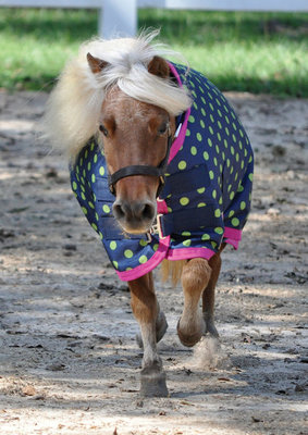 Jeffers 600D Polka Dot Miniature Horse Blanket 240g, Lime Green