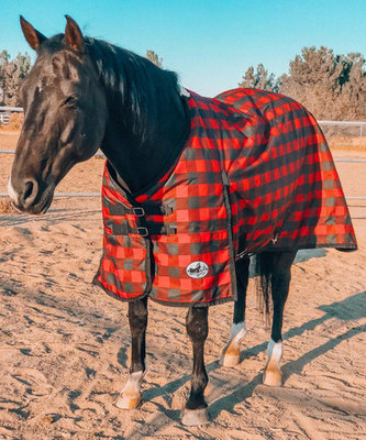 """Jeffers Expression """"Buffalo Check"""" Horse Blanket"""