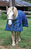"Jeffers Expression ""Uniquely English"" Draft Horse Blanket"