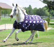 "Jeffers 600D ""Purple Rein"" Horse Blanket, 240g"