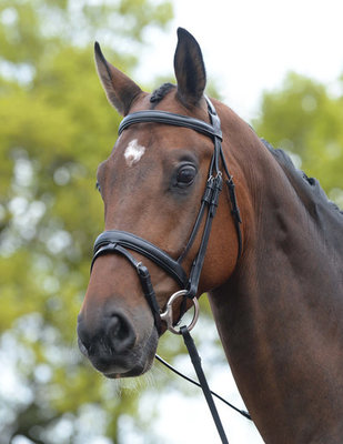 Kincade Padded Flash Horse Bridle