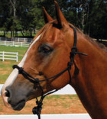 Knotted Training Halter, Yearling
