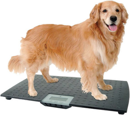 Large Digital Pet Scale