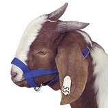 Jeffers Goat Halter, Large