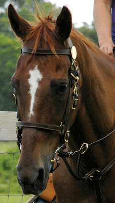 Leather Halter Bridle Combo