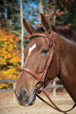 Manchester Hunter/Jumper Bridle