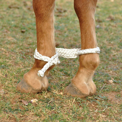 Martin Saddlery Mule Tape Hobbles