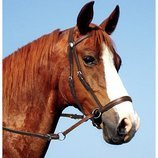 Dr. Cook Bitless Bridle, Medium/Average