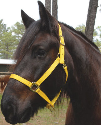 Nylon Draft Halter, medium (1600-2000 lb)