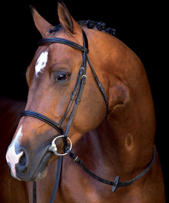 Mio Padded Bridle