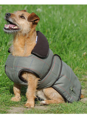 WeatherBeeta ComFITec Olive Tweed Dog Coat