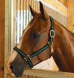 Jeffers Padded Halter with Snap