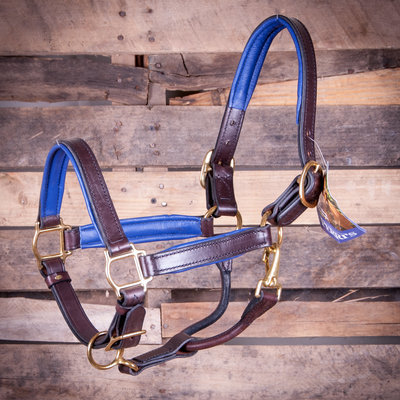 Perri's Soft Padded Leather Halter, Havana/Blue