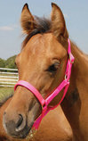 Jeffers Pony Halters, under 300 lb