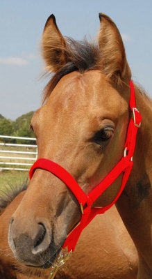 Jeffers Pony Halter, under 300 lb